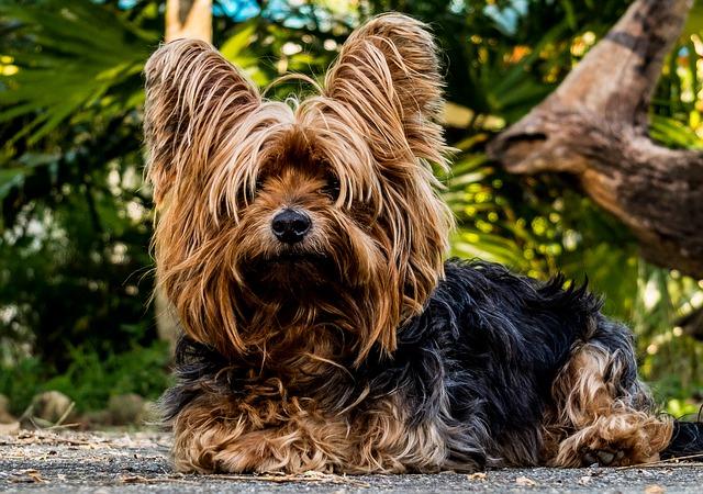 dobry fryzjer dla psów