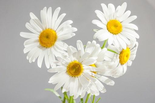 duża hurtownia sztucznych kwiatów